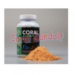 Coral Sprint Fauna Marin