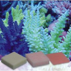 Automatic Elements Fe 20 unds-Korallen-Zucht-Zeovit