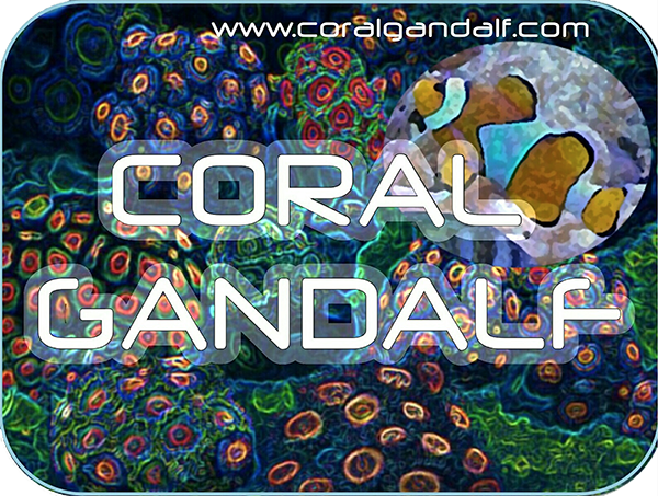 Coral gandalf